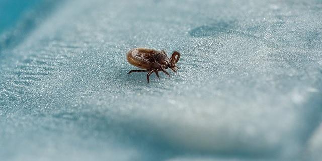 Prévenir la maladie de Lyme