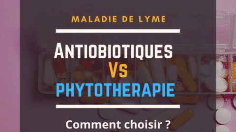Antibio vs Phytothérapie - Maladie de Lyme